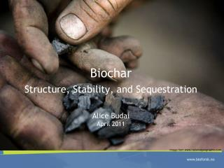 Biochar Structure ,  Stability , and  Sequestration Alice Budai April 2011