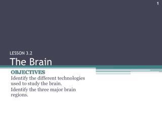 LESSON 3.2 The Brain