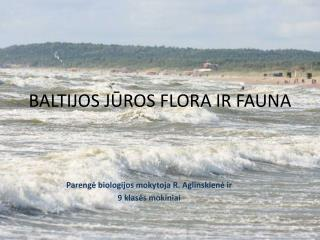 BALTIJOS JŪROS FLORA IR FAUNA