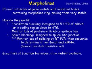 Morpholinos
