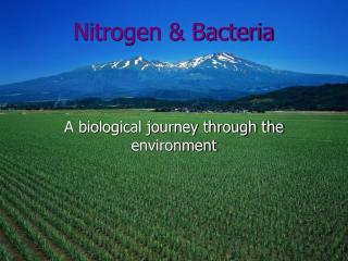 Nitrogen & Bacteria A biological journey through the environment