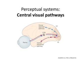 Perceptual systems: Central visual pathways