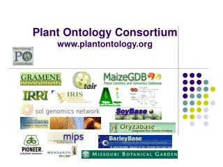 Plant Ontology Consortium plantontology