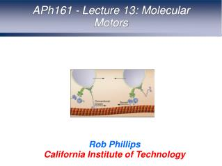 APh161 - Lecture 13: Molecular Motors