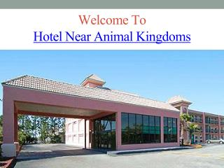 Hotel Near Animal Kingdoms