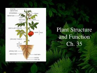 Plant Structure and Function Ch. 35