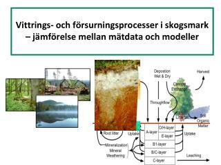 Vittrings - och  försurningsprocesser i skogsmark  –  jämförelse mellan mätdata  och  modeller