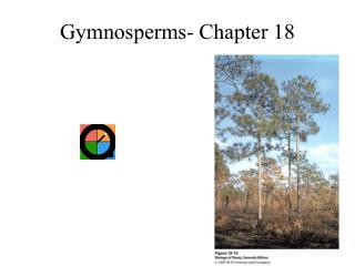 Gymnosperms- Chapter 18