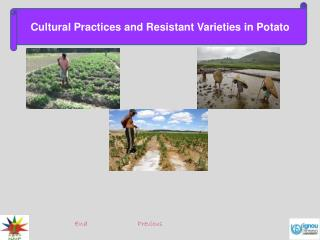 Cultural Practices and Resistant Varieties in Potato