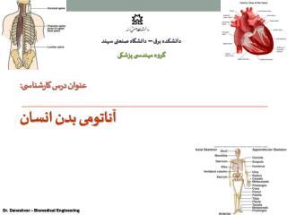 عنوان درس کارشناسی: آناتومی بدن انسان