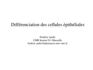 Diff renciation des cellules  pith liales