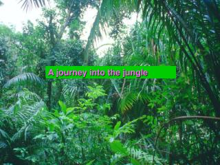 A journey into the jungle