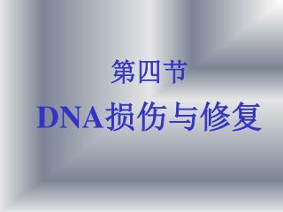 第四节 DNA 损伤与修复