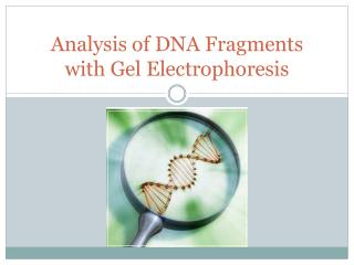 Analysis of DNA Fragments with Gel Electrophoresis
