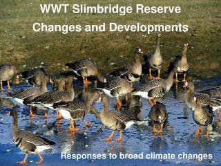 WWT Slimbridge Reserve Changes and Developments