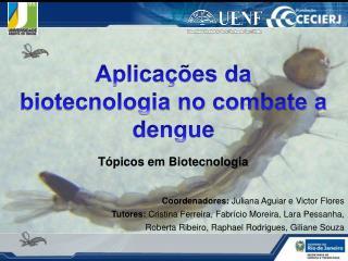 Aplicações da biotecnologia no combate a dengue Tópicos em Biotecnologia