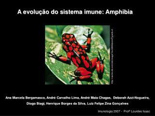 A evolução do sistema imune: Amphibia