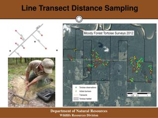Line  Transect Distance Sampling