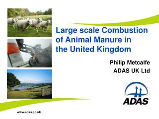 Large scale Combustion of Animal Manure in  the United Kingdom