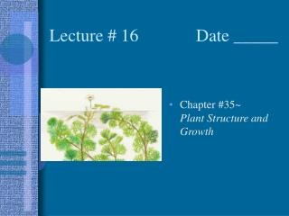 Lecture # 16             Date _____