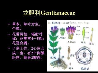 龙胆科 Gentianaceae