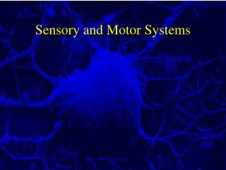 Sensory and Motor Systems