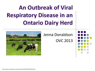 An Outbreak of Viral Respiratory Disease in an Ontario Dairy Herd