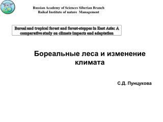 Бореальные леса и изменение климата С.Д. Пунцукова