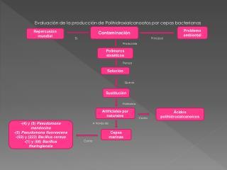 Evaluación de la producción de Polihidroxialcanoatos por cepas bacterianas  marinas