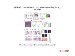 G Pouchelon  et al. Nature  000 , 1-4 (2014)  doi:10.1038/nature13390