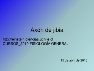 Axón de jibia