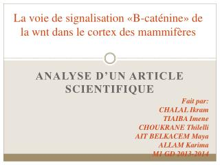 La voie de signalisation �B- cat�nine � de la  wnt  dans le cortex des mammif�res