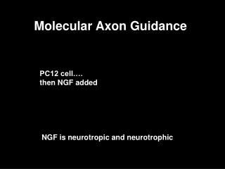 Molecular Axon Guidance