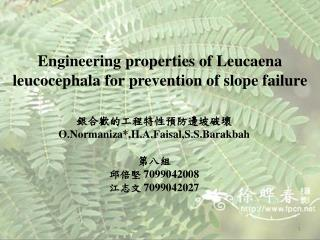 Engineering properties of Leucaena leucocephala for prevention of slope failure
