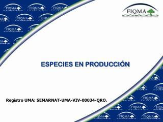 ESPECIES EN PRODUCCIÓN