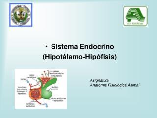 Sistema Endocrino  (Hipotálamo-Hipófisis)