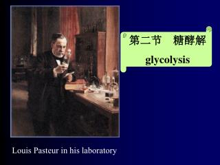 第二节  糖酵解 glycolysis