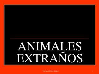 ANIMALES EXTRA�OS