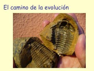 El camino de la evolución