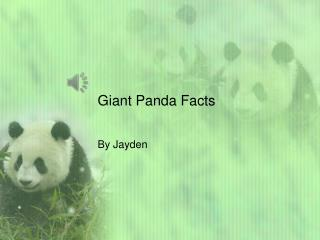 Giant Panda Facts