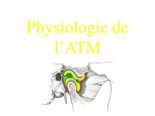 Physiologie de l'ATM