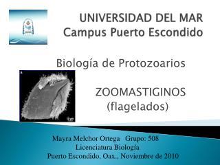 UNIVERSIDAD  DEL MAR         Campus  Puerto Escondido