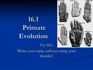 16.1  Primate  Evolution