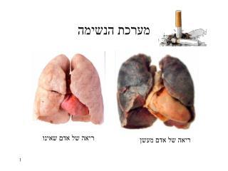 מערכת הנשימה
