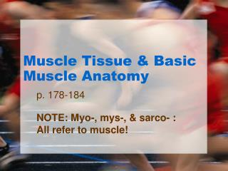 Muscle Tissue & Basic Muscle Anatomy