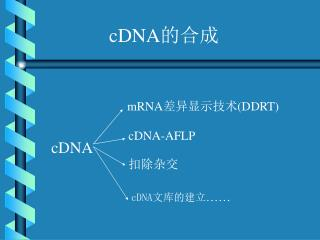cDNA 的合成