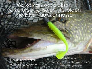 Valikoivan kalastuksen vaikutukset ja isojen yksilöiden merkitys haukikannassa
