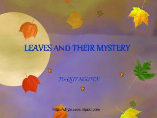 LEAVES  AND  THEIR MYSTERY