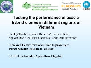 Testing the performance of acacia hybrid clones in different regions of Vietnam