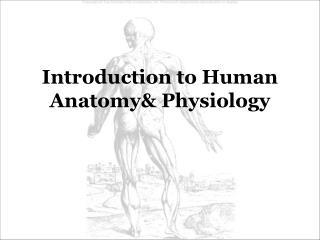 Introduction to Human Anatomy& Physiology